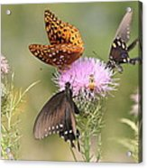 Pollen Party Acrylic Print by Christopher Ewing