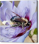 Pollen Passion Acrylic Print