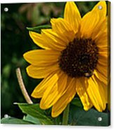 Pollinating In Camouflage Acrylic Print