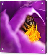 Pollination Party Of One Acrylic Print by Vicki Jauron