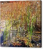 Pond And Rushes Acrylic Print