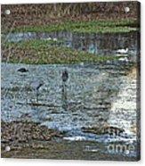 Pond Birds At Sunset Acrylic Print
