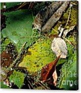 Pond Lumens Acrylic Print