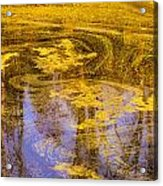Pond Scum Two Acrylic Print