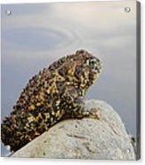 Pondering Toad Acrylic Print