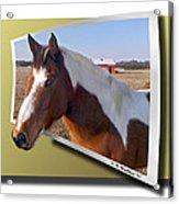 Pony Posing Acrylic Print