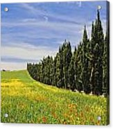 Poppies And Wild Flowers In Wheat Field Acrylic Print