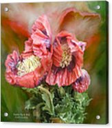 Poppies Big And Bold Acrylic Print