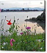 Poppies By The River Acrylic Print