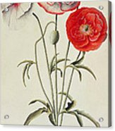 Poppies Corn Acrylic Print
