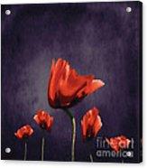 Poppies Fun 02b Acrylic Print