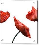 Poppies On White Acrylic Print