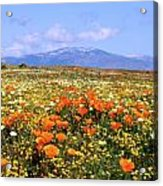 Poppies Over The Mountain Acrylic Print