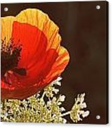 Poppy And Lace Acrylic Print