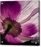 Poppy Detail 1 Acrylic Print