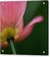 Poppy Details Acrylic Print