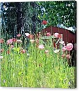 Poppy Field Acrylic Print by Myrna Migala