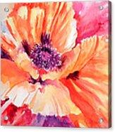Poppy Fiesta Acrylic Print