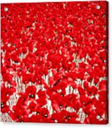 Poppy Meadow ... Acrylic Print