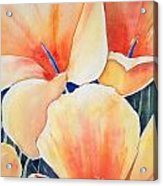 Poppy Song Acrylic Print by Regina Ammerman