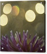Porcupine Acrylic Print