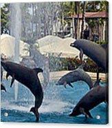 Porpoise Statues   Maui Hawaii Acrylic Print