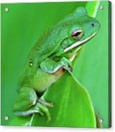 Portrait In Green Acrylic Print by Jeff R Clow