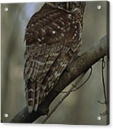Portrait Of A Barred Owl Perched Acrylic Print