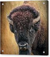 Portrait Of A Buffalo Acrylic Print by Tamyra Ayles
