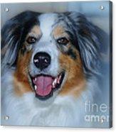 Portrait Of A Dog Lady Acrylic Print