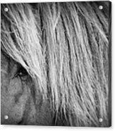 Portrait Of A Wild Horse Acrylic Print