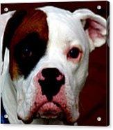 Portrait Of Her Best Friend  Acrylic Print by Steven Digman