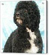 Portugese Water Dog 418 Acrylic Print
