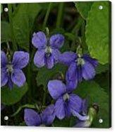 Positively Purple Acrylic Print