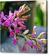 Posteredged Flowers Acrylic Print