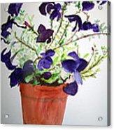 Pot Of Flowers One Acrylic Print