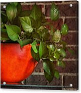 Pot Of Greens Acrylic Print by Brenda Bryant