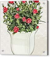 Pot Of Red Roses On Lace Background Acrylic Print