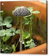 Potted Acrylic Print