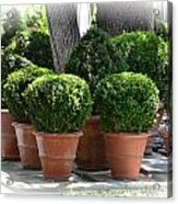 Potted Topiary Garden Acrylic Print