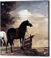 Potter: Horses, 1649 Acrylic Print