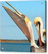 Pouch And Preen Acrylic Print