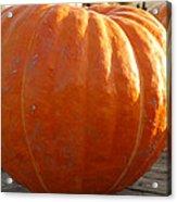 Pounds Of Pumpkin  Fun Acrylic Print