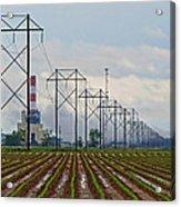Power And Plants I  Acrylic Print