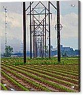 Power And Plants II Acrylic Print