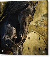 Power House Horse Acrylic Print