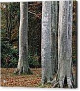 Powerscourt Woods,co Acrylic Print