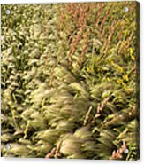 Prairie Crop With Weeds Acrylic Print