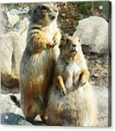 Prairie Dog Formal Portrait Acrylic Print