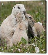 Prairie Kiss Acrylic Print